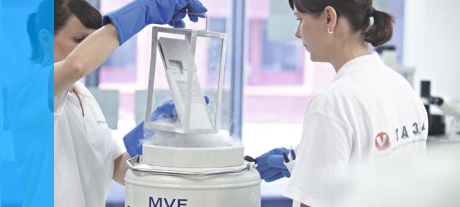 Para qué sirven las células madre de cordón umbilical