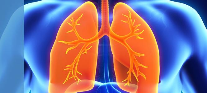 Células madre regeneran pulmón humano