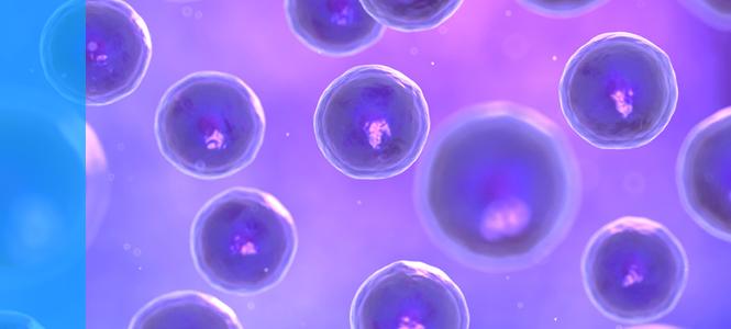 El Centro en Red de Medicina Regenerativa y Terapia Celular celebra su décimo aniversario