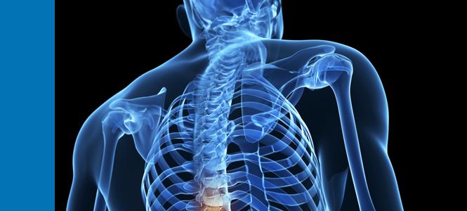 Desarrollan, con células madre, neuronas capaces de transmitir y restablecer señales en una médula espinal dañada