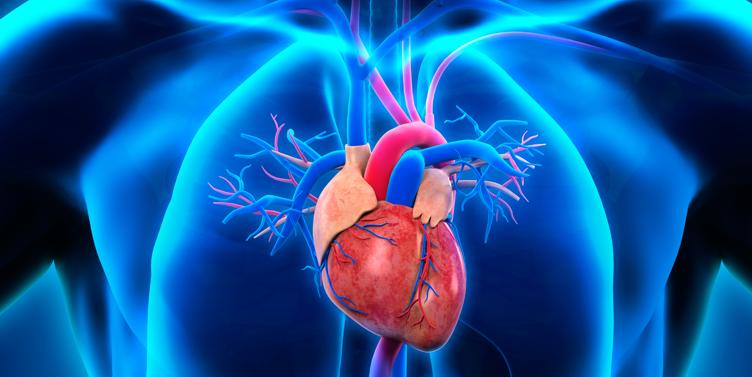 Investigadores crean tejidos cardiacos a partir de células madre