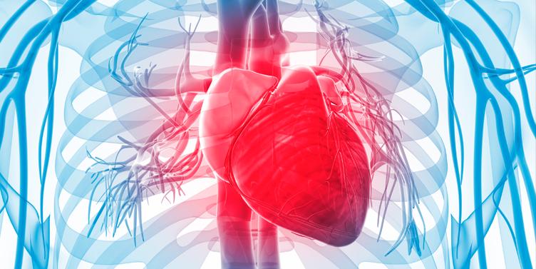 Las células madre del cordón umbilical son eficaces y seguras para tratar la insuficiencia cardiaca